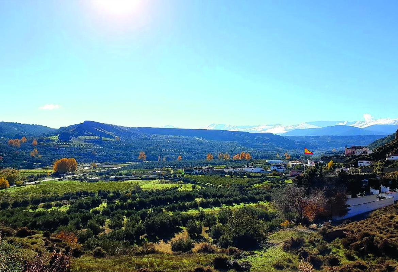 Olivenöl Spanien Murillo