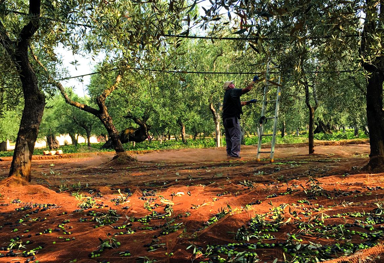 Olivenöl o'monto Italien